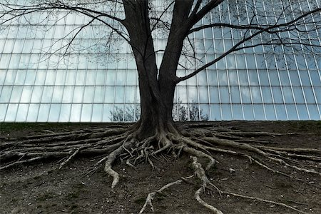 Detail of tree roots with window grid Stock Photo - Premium Royalty-Free, Code: 6106-05603162