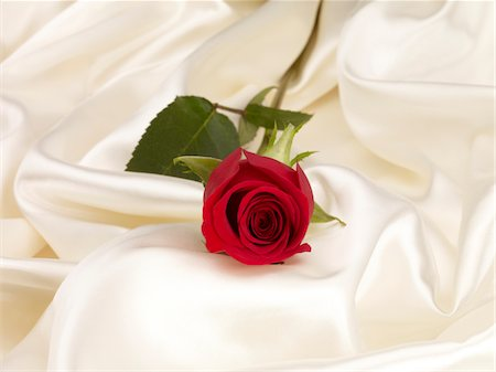 silk - Rose on satin Stock Photo - Premium Royalty-Free, Code: 6106-05758813