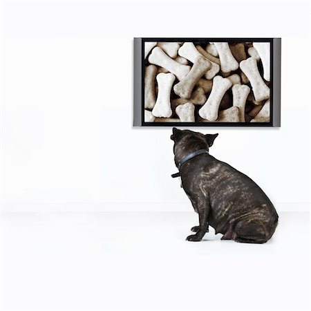French Bulldog wants the food shown on TV Stock Photo - Premium Royalty-Free, Code: 6106-05787728