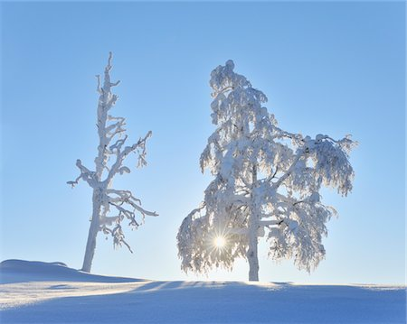 Snow covered trees Stock Photo - Premium Royalty-Free, Code: 6106-05787995