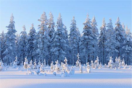 Snow covered trees Stock Photo - Premium Royalty-Free, Code: 6106-05787998