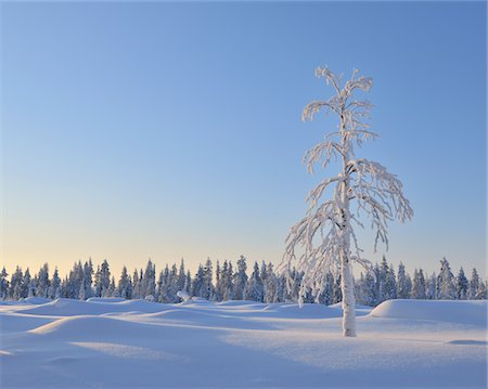 Lone tree Stock Photo - Premium Royalty-Free, Code: 6106-05788001