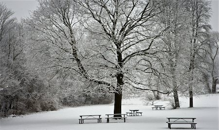 PicnicTablesInSnow Stock Photo - Premium Royalty-Free, Code: 6106-05951666