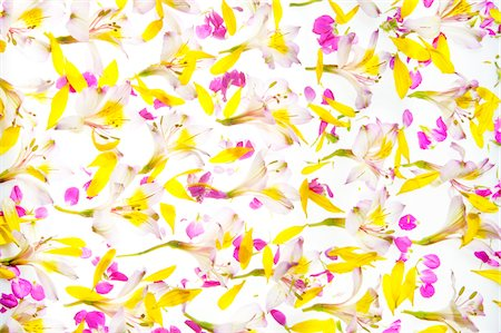 floral pattern - Flowers Stock Photo - Premium Royalty-Free, Code: 6106-06042145