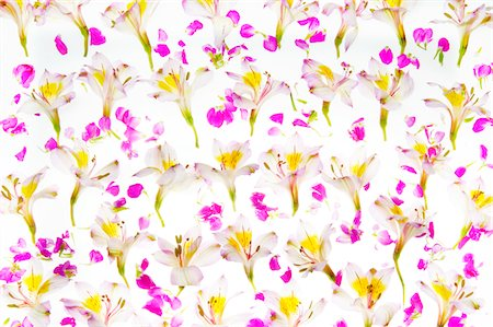 decoration pattern - Flowers Stock Photo - Premium Royalty-Free, Code: 6106-06042149