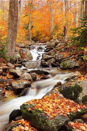 stream - Green Mountains, Vermont Stock Photo - Premium Royalty-Free, Code: 6106-06307901