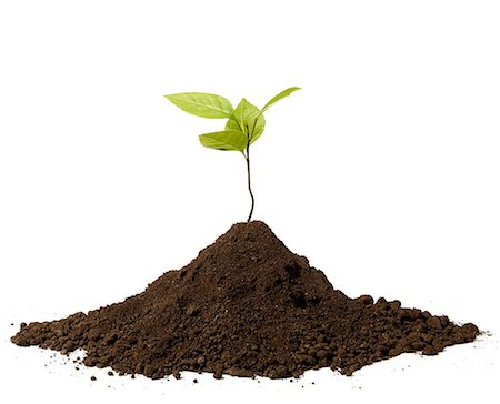 dirt - seedling Stock Photo - Premium Royalty-Free, Code: 6106-06308532