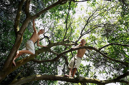 two young boys in tree Stock Photo - Premium Royalty-Free, Code: 6106-06310899