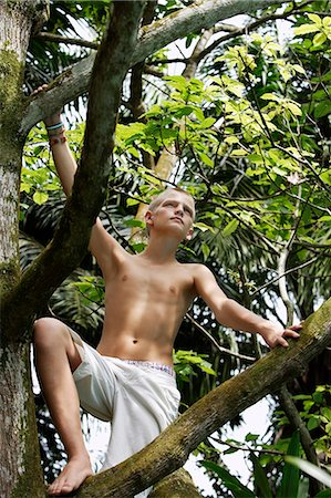 young boy in tree Stock Photo - Premium Royalty-Free, Code: 6106-06310903