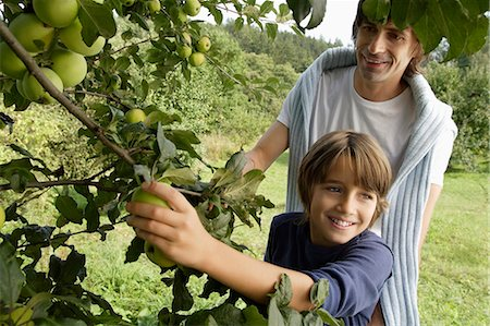 family apple orchard - father and son picking apples off tree Stock Photo - Premium Royalty-Free, Code: 6106-06311342