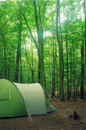 Woodland camping Stock Photo - Premium Royalty-Free, Code: 6106-06496208