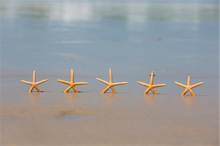 sea star - Five Star Beach Holiday Concept Stock Photo - Premium Royalty-Free, Code: 6106-06497346