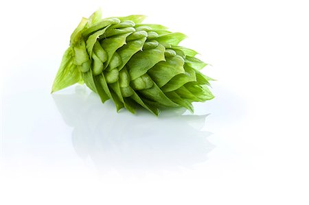 Fresh Hops Stock Photo - Premium Royalty-Free, Code: 6106-06402177