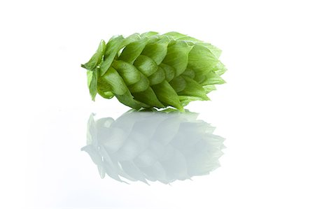 Fresh Hops Stock Photo - Premium Royalty-Free, Code: 6106-06402181