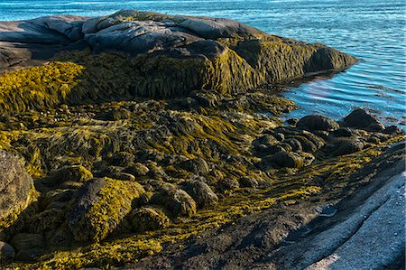 Low tide along Maine's Down East coast Stock Photo - Premium Royalty-Free, Code: 6106-06434670