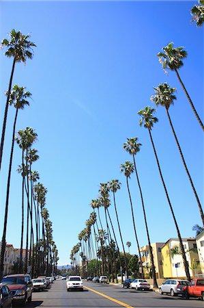 palm - Santa Monica Stock Photo - Premium Royalty-Free, Code: 6106-06535678