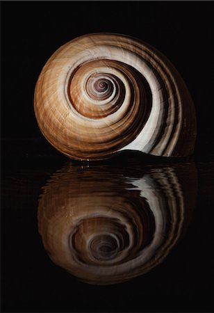 swirl - Tonna Oleria Shell Stock Photo - Premium Royalty-Free, Code: 6106-06831727
