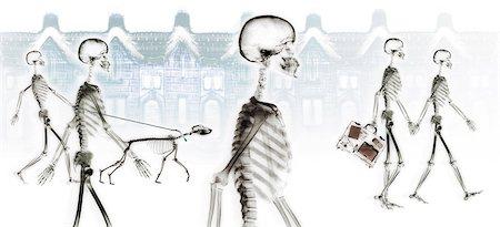 dog x-ray - Skeletons walking through neighborhood Stock Photo - Premium Royalty-Free, Code: 6106-07011884
