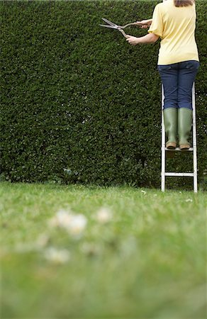 descriptive - Woman standing on ladder,  trimming hedge with hedge clippers, rear view Stock Photo - Premium Royalty-Free, Code: 6106-07022110