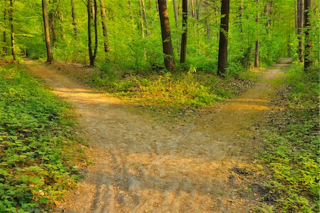 Forked Forest Path Stock Photo - Premium Royalty-Free, Code: 6106-07029407