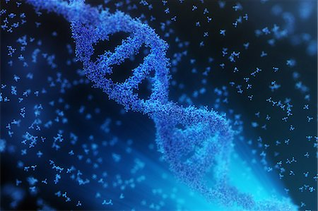 Atoms forming a DNA chain Stock Photo - Premium Royalty-Free, Code: 6106-07029714