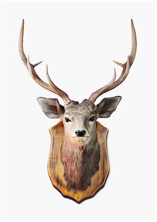 Deer Trophy Stock Photo - Premium Royalty-Free, Code: 6106-07121571