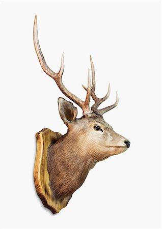 Deer Trophy Stock Photo - Premium Royalty-Free, Code: 6106-07121585