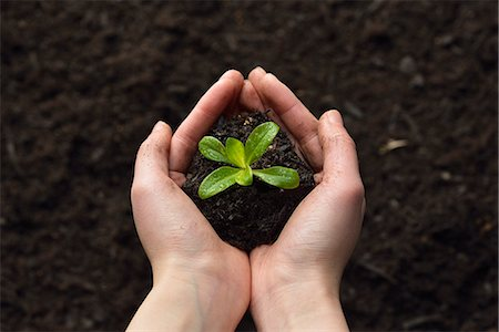 dirt - Soil and plant in hands Stock Photo - Premium Royalty-Free, Code: 6106-07121609