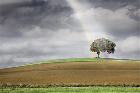 Solitary tree illuminated by a rainbow Stock Photo - Premium Royalty-Free, Code: 6106-07349921