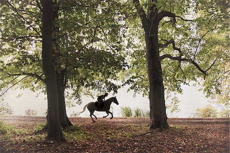Horse and rider gallop through woodland Stock Photo - Premium Royalty-Free, Code: 6106-07350349
