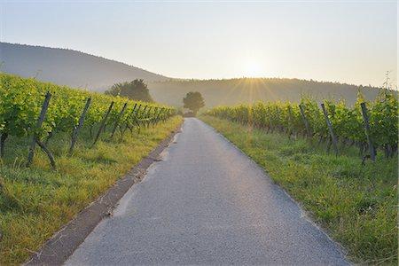 Road in the Vineyard Stock Photo - Premium Royalty-Free, Code: 6106-07350334