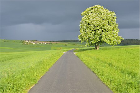 scenic and spring (season) - Chestnut Tree with Road Stock Photo - Premium Royalty-Free, Code: 6106-07350734