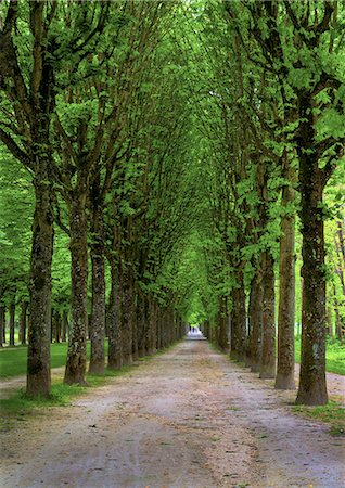 france - Path lined with tall Chestnut Trees Stock Photo - Premium Royalty-Free, Code: 6106-07350999