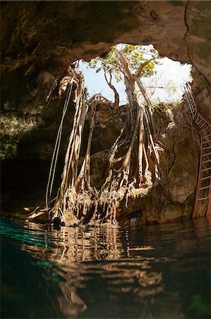 Cenote Entrance Stock Photo - Premium Royalty-Free, Code: 6106-07454648