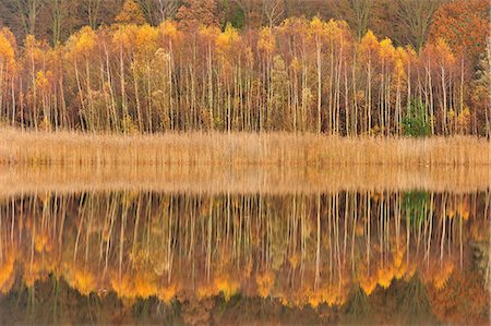 fall trees lake - Mirror lake in autumn Stock Photo - Premium Royalty-Free, Code: 6106-07455571