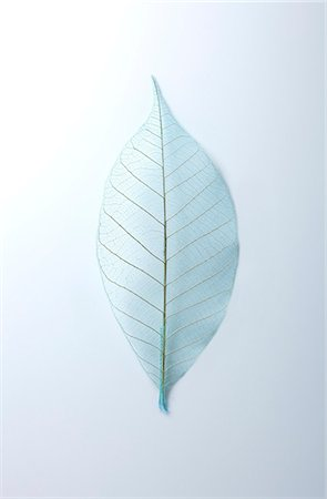 Leaf Skeleton Stock Photo - Premium Royalty-Free, Code: 6106-07455531