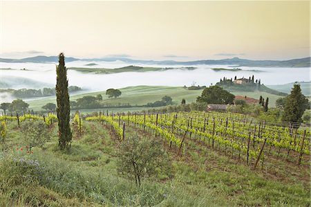 Vineyards in Val d'Orcia Stock Photo - Premium Royalty-Free, Code: 6106-07493010