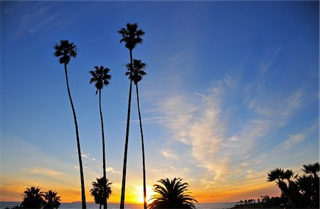 palm - Laguna Beach Sunset Stock Photo - Premium Royalty-Free, Code: 6106-07493518