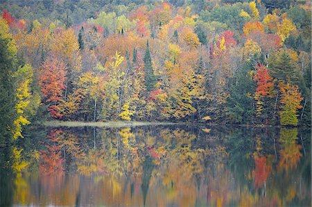 Fall Trees Reflecting into Lake Stock Photo - Premium Royalty-Free, Code: 6106-07493976