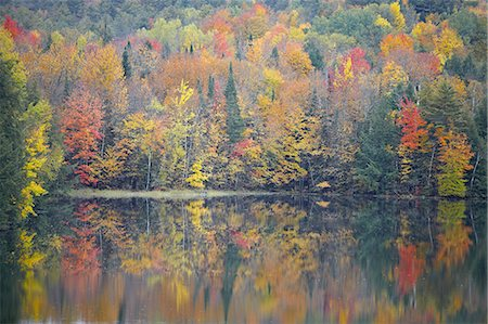 Fall Trees Reflecting into Lake Stock Photo - Premium Royalty-Free, Code: 6106-07493976