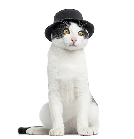 European cat wearing a top hat, sitting Stock Photo - Premium Royalty-Free, Code: 6106-07594609