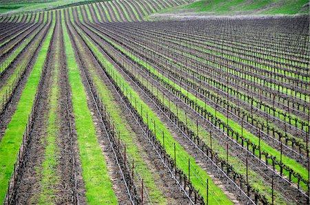 Endless vineyards Stock Photo - Premium Royalty-Free, Code: 6106-07601813