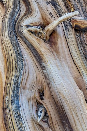 pattern - Ancient Bristlecone Pine Tree Forest, California Stock Photo - Premium Royalty-Free, Code: 6106-07602394