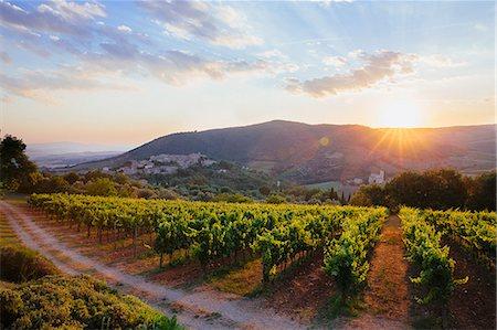 Vineyard at sunset Stock Photo - Premium Royalty-Free, Code: 6106-08351051