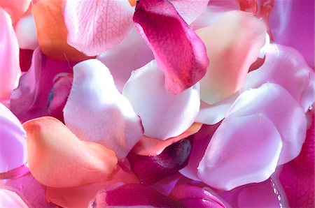 petal - Flowers petals, close-up Stock Photo - Premium Royalty-Free, Code: 6108-05857236