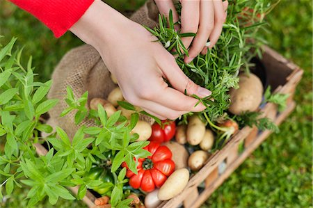 selecting - High angle view of a woman's hand putting vegetables in a crate Stock Photo - Premium Royalty-Free, Code: 6108-06166699