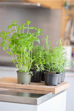 potted plant - Assorted herbal plants Stock Photo - Premium Royalty-Free, Code: 6108-06168404