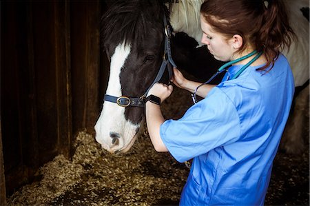 scroll - Vet examining horse in stable Stock Photo - Premium Royalty-Free, Code: 6109-08399548