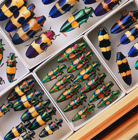 Collection of Colorful Beetles Stock Photo - Premium Royalty-Free, Code: 6110-08715112