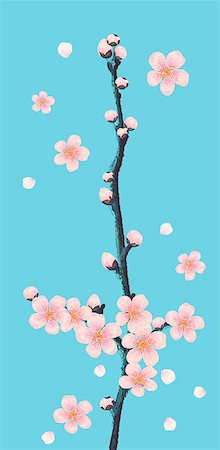 Cherry Blossom On Colored Background Stock Photo - Premium Royalty-Free, Code: 6111-06728641
